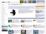 Leading bird news service joins Birdwatch